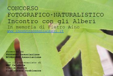 Concorso Fotografico Incontro con gli alberi – Scadenza 05 Maggio 2015