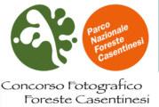 Concorso Fotografico Foreste Casentinesi – Scadenza 30 Giugno 2015