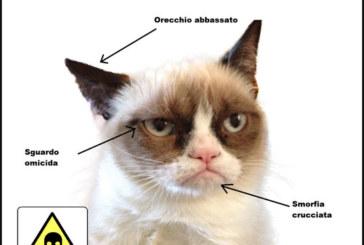 Concorso Fotografico Il mio cinico gatto – Scadenza 30 Marzo 2015