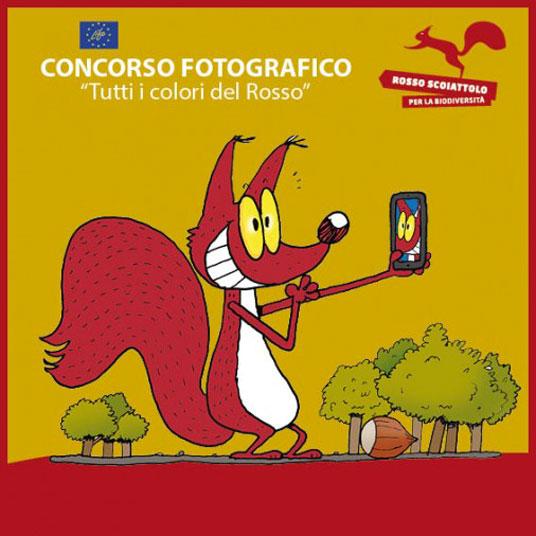 Concorso Fotografico Scoiattolo Rosso