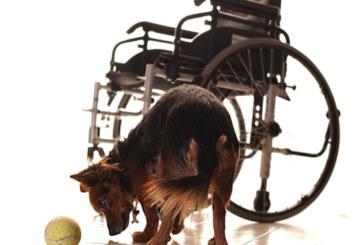 """Concorso Fotografico """"Animali, Terapia dell'Anima"""" – Scadenza 24 Maggio 2015"""