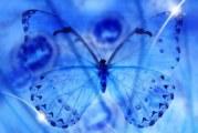 Raro come una farfalla d'inverno – Scadenza 06 Marzo 2016