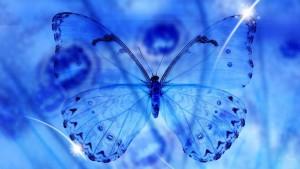 Raro come una farfalla d'inverno