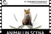 Concorso Fotografico Animali in scena – Scadenza 13 Marzo 2017
