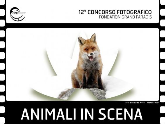 Concorso Fotografico Animali in scena