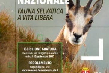 """Concorso fotografico nazionale """"Fauna selvatica a vita libera"""" – Scadenza 15 Settmbre 2017"""