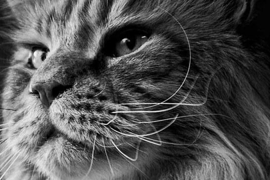 Federica Gerardi – Fotografa Emergente